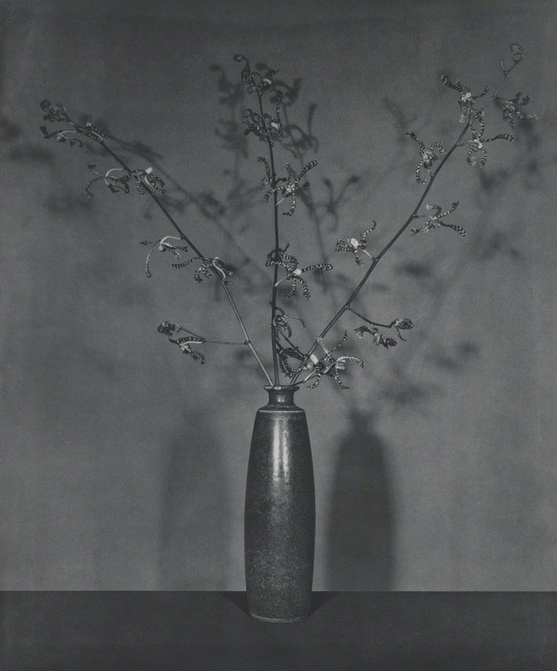 Роберт Мэпплторп Robert Mapplethorpe фотографии 3